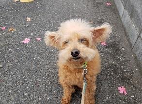 メルセデス犬2.jpg