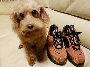 メルセデス犬.jpg