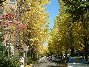 秋の京大5.jpg