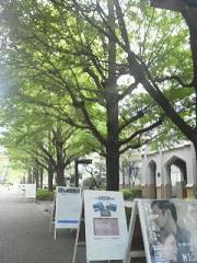青山学院2.jpg
