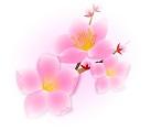 haru_image.jpg